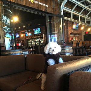 dog friendly restaurants in chattanooga   chattavore