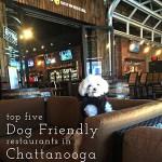 Dog Friendly Restaurants in Chattanooga-Friday List
