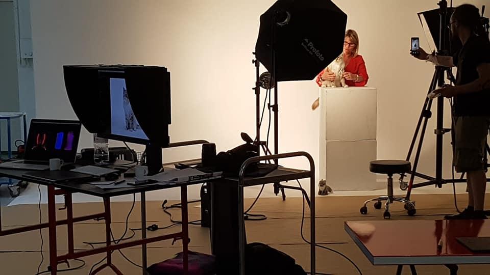 casting shooting photo chaton chat ragdoll chatterie la perle des anges ragdoll normandie caen calvados 4