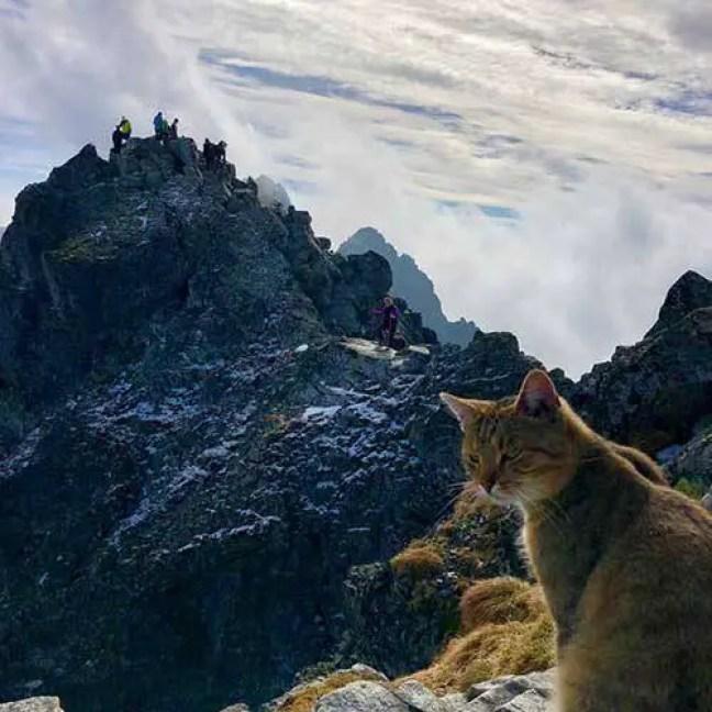 Os gatos são criaturas realmente fantásticas! Nunca poderemos listar todas as coisas loucas que estes adoráveis gatos podem fazer. Agora, em um caso digno do recorde do Guinness, um alpinista que chegou ao topo do pico mais alto da Polônia encontrou algo que nunca teria esperado: um gato doméstico descansando!