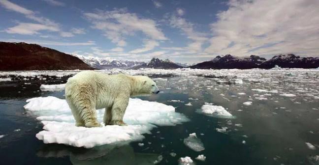 aquecimento_global_urso