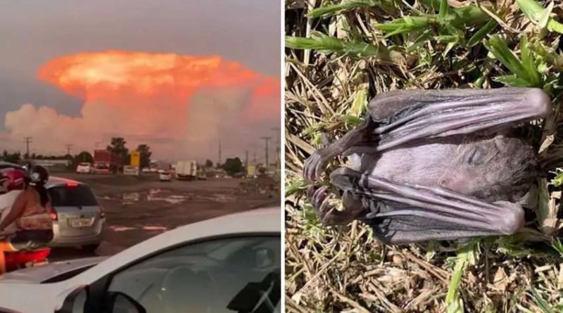 Cogumelo vermelho sobre Portugal e morte em massa de morcegos em Israel, sinais apocalípticos