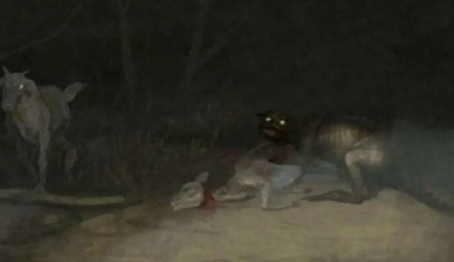 misteriosa criatura que drenou o sangue de mais de 50 animais
