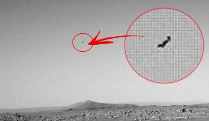 Será que é foto de um pássaro terrestre voando?