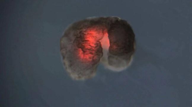 Os cientistas constroem uma célula artificial que cresce e se replica como uma natural.