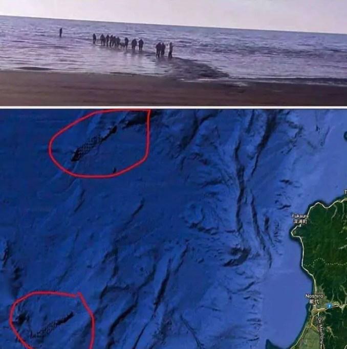 Imagens de satélite: você pode ver estruturas que poderiam ser antigas estradas de pedra construídas por civilizações desaparecidas.
