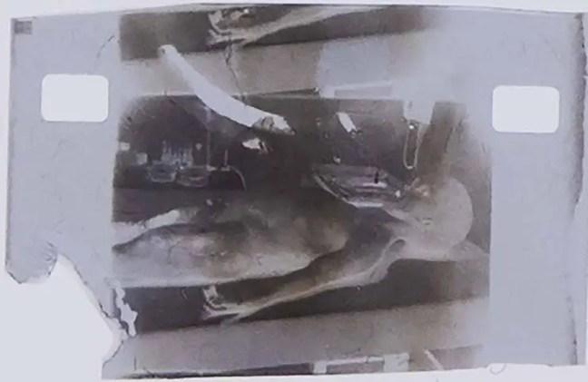 Imagem que supostamente mostra um cadáver alienígena na mesa de um médico forense.