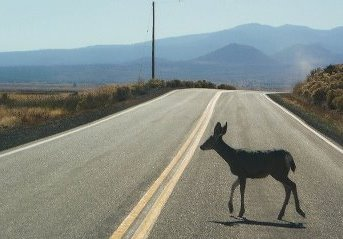 wildlife and cars