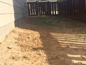 Our landscaping without grass; west side of the house
