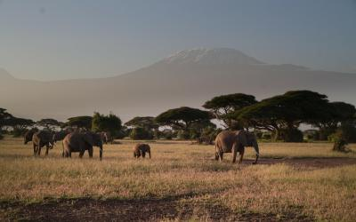 The Luxury South African Safari Lodges For Fun & Relaxation