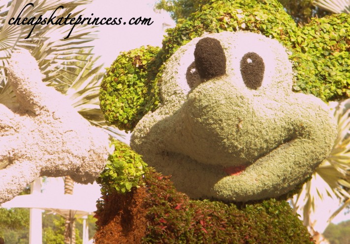 Mickey Mouse, Mickey Mouse plant, Mickey Mouse topiary, Contemporary Resort Topiary, Mickey, Disney topiary, Disney gardens, Disney plants