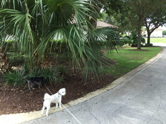rental houses that allow dogs Reunion Resort