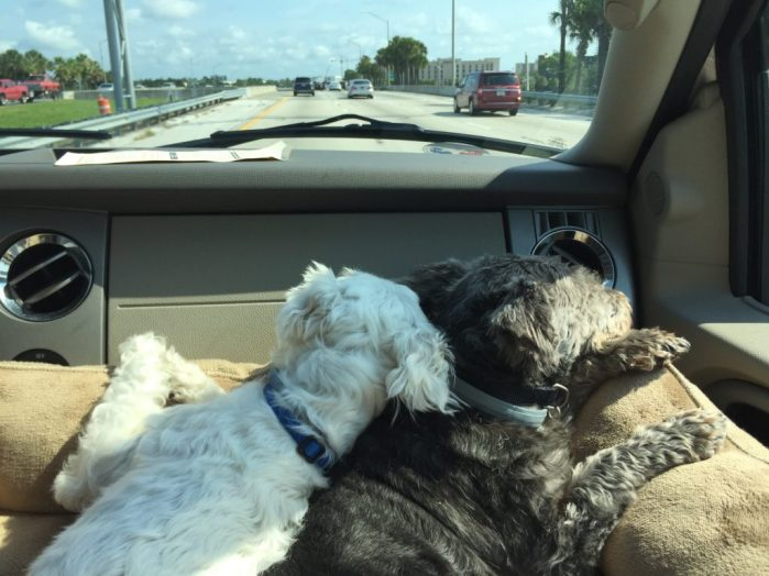 take dogs on vacation to Orlando