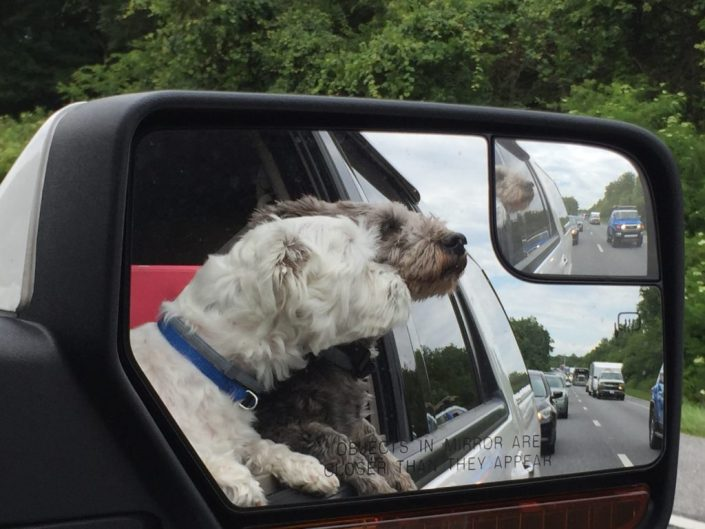 why take dogs on vacation