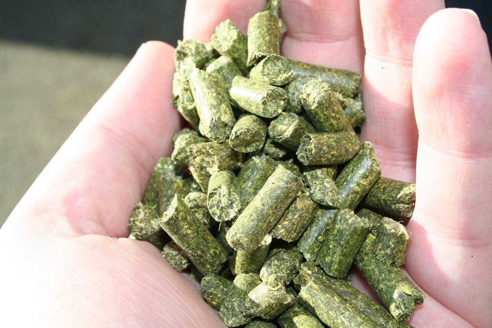 Image Result For Alfalfa Pellets Vegetable Garden