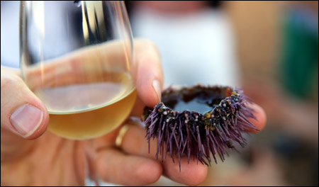 Grillo with sea urchin
