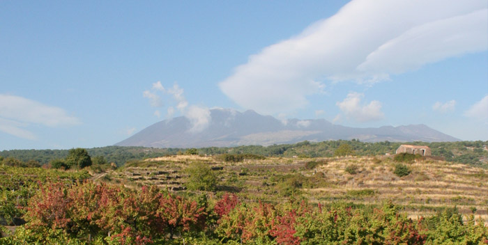 Mt. Etna vineyards