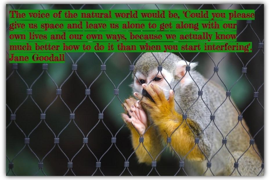 Understanding Captivity of Wildlife
