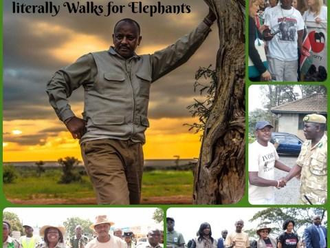 Jim Nyamu: The Man Who literally Walks for Elephants