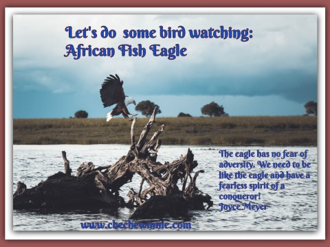 Let's do some bird watching: African Fish Eagle