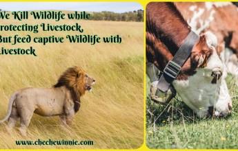 We Kill Wildlife while protecting Livestock, But feed captive Wildlife with Livestock