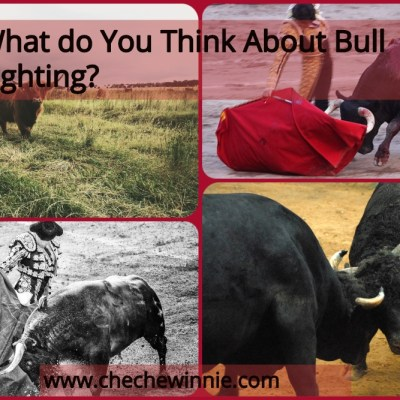 What do You Think About Bull Fighting?