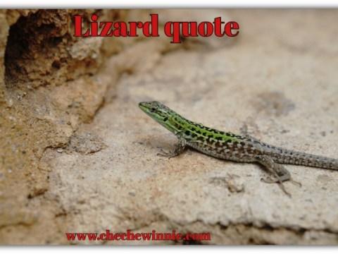 Lizard quote