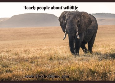 Promoting Conservation Education and Awareness