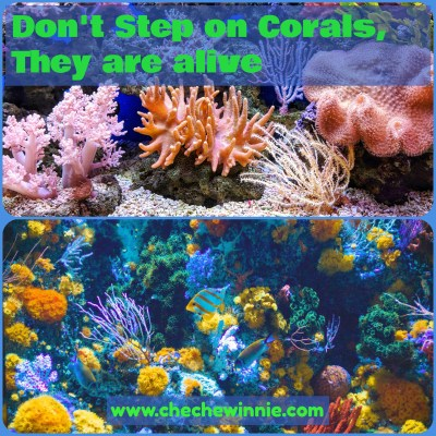 Don't Step on Corals, They are alive