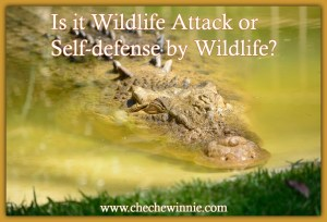 Is it Wildlife Attack or Self-defence by Wildlife?