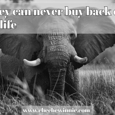Money can never buy back our wildlife