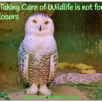 Taking Care of Wildlife is not for losers