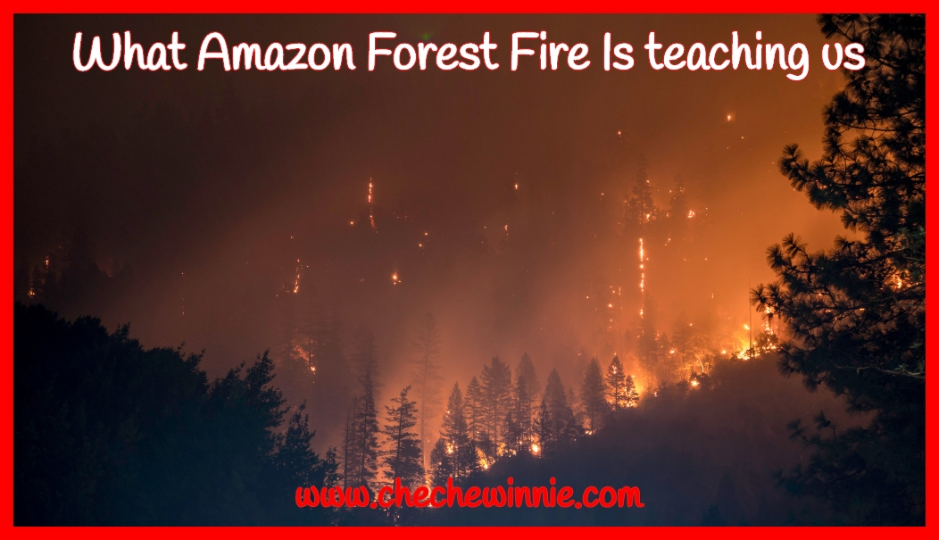 What Amazon Forest Fire Is teaching us