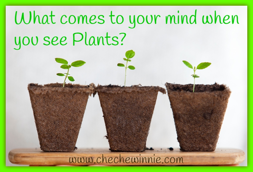 What comes to your mind when you see Plants?