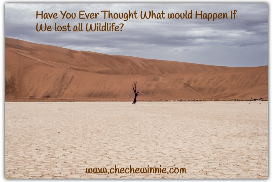 Have You Ever Thought What would Happen If We lost all Wildlife?