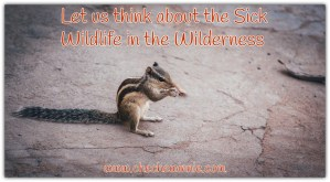 Let us think about Sick Wildlife in the Wilderness