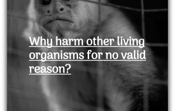 Why harm other living organisms for no valid reason?