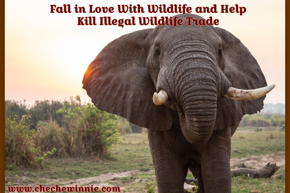 Fall in Love With Wildlife and Help Kill Illegal Wildlife Trade