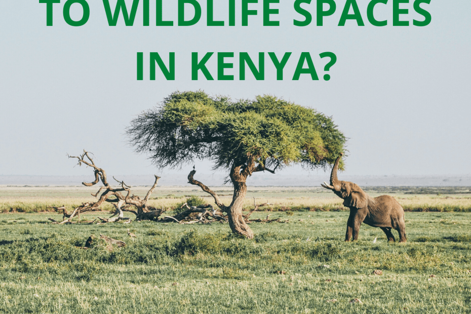 What is Happening to Wildlife Spaces in Kenya?