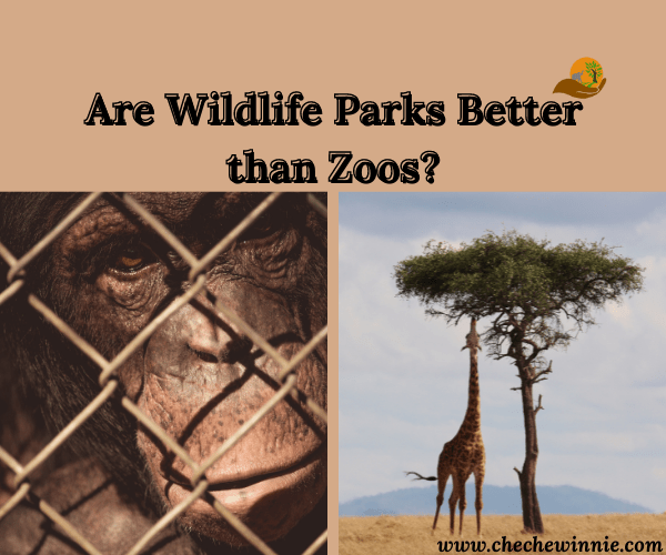 Are Wildlife Parks Better than Zoos?