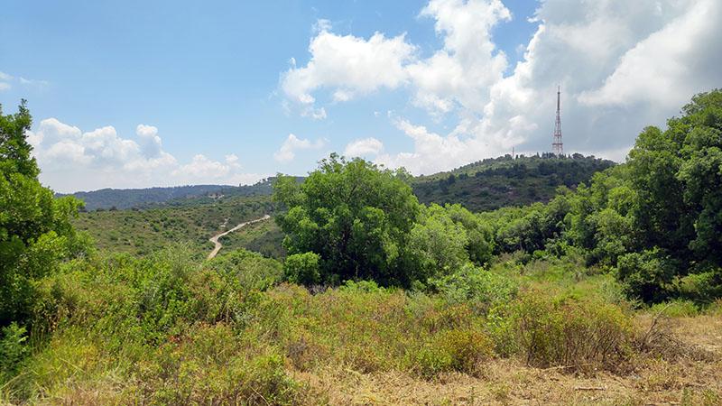 הנוף מהמסלול טיול חורשת הארבעים בכרמל