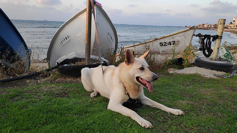 נסקה בבת גלים כלב