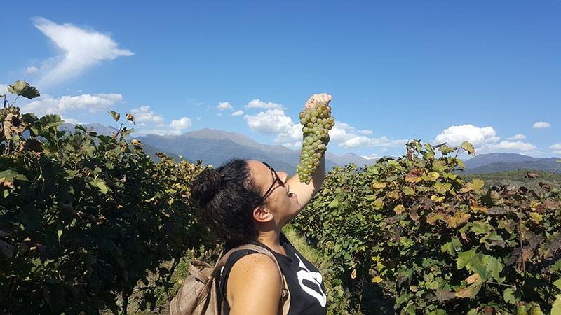 בציר ענבים גאורגיה