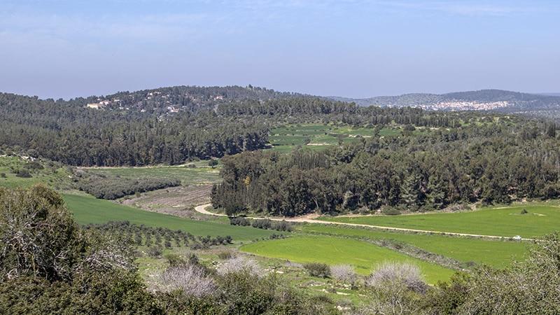 מטה יהודה באביב