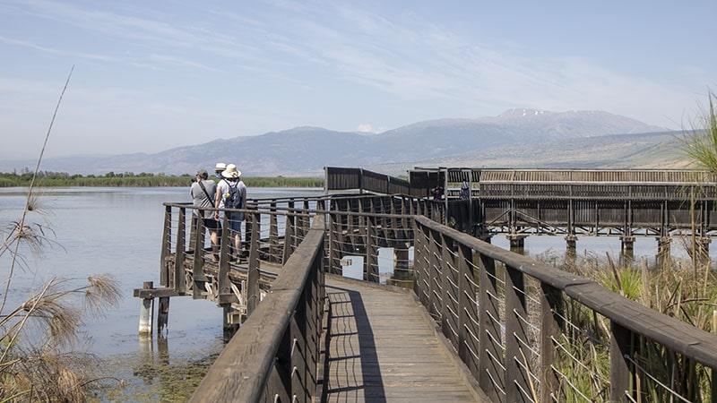 הגשר הצף בשמורת החולה