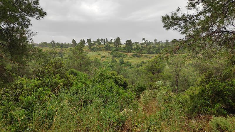 נוף במסלול שביל היער הקסום