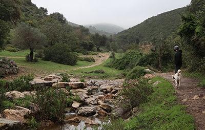 מסלול טיול חורפי בנחל אורן