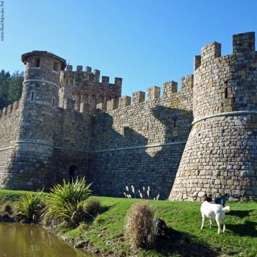 Goats in front of Castello di Amorosa