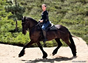 Anyanka CK - Friesian Mare for Sale by Mintse