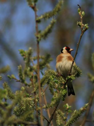 Birdwatching in Stoke on Trent, Staffordshire